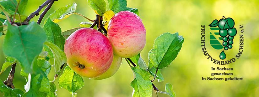 Vom Baum in die Flasche – so entsteht Apfelsaft